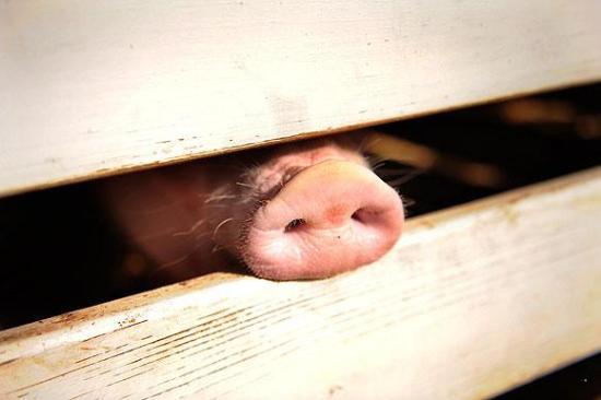 Информация о свином гриппе