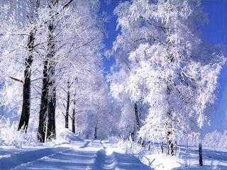 Зима 2011-2012года.
