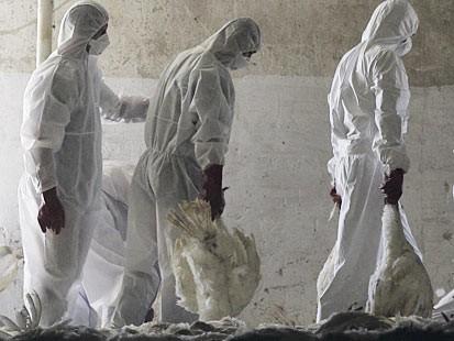 Распространение смертельного птичьего гриппа