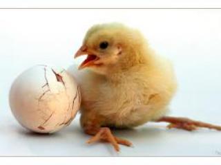 Статьи о птичьем гриппе будут опубликованы