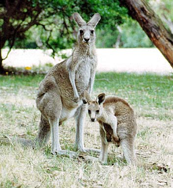 Грипп добрался и до Австралии
