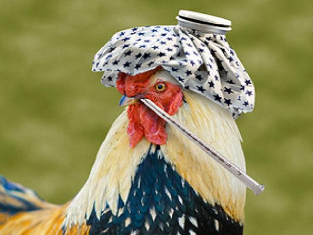 Краснодар опять страдает от падежа птиц
