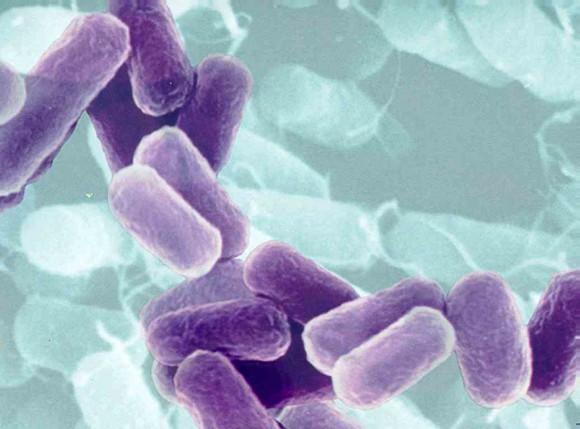 Восприимчивость к вирусам следует искать на уровне ДНК