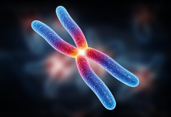 Концевые участки хромосом влияют на способность организма бороться с вирусами