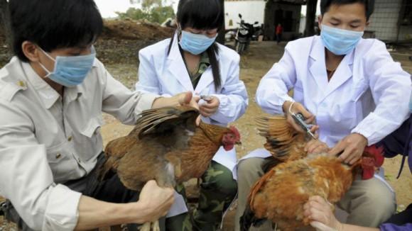 Шанхай по прежнему лихорадит от гриппа