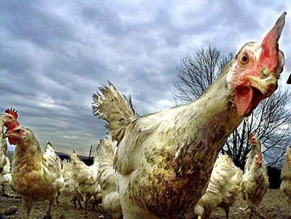 Китайским ученым удалось приблизится к решению вопроса с гриппом H7N9