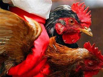 Птичий грипп может нанести еще один, более серьезный удар по человечеству