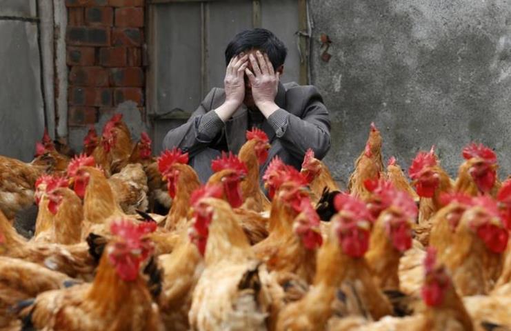 Китайский птичий грипп заставил ввести карантинные меры в Киргизии