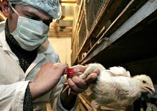 На Тайване у человека обнаружили штамм гриппа способный вызвать пандемию