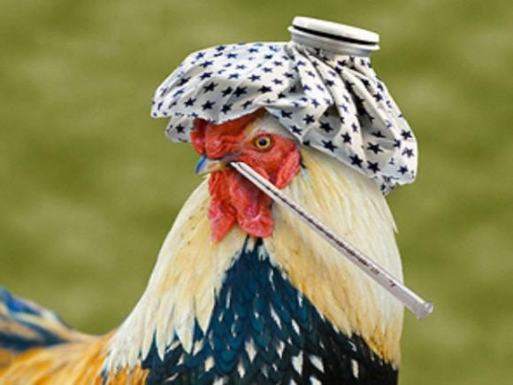 Ученые всерьез обеспокоены ситуацией вокруг «Китайского птичьего» гриппа