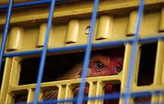 Последние новости Китая: ещё один человек умер от вируса H7N9