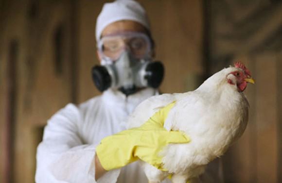 Ученые доказали безопасность китайского гриппа типа Н10N8