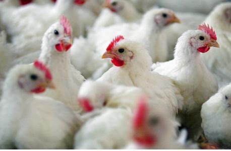 Наконец-то ученым удалось выяснить причину появления птичьего гриппа