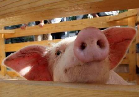 Как не заболеть свиным гриппом – рекомендации специалистов