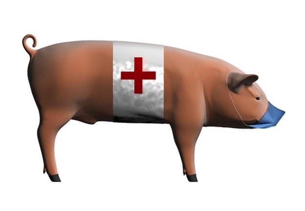 Свиной грипп в России