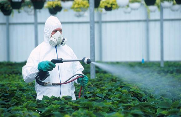 Правильный выбор защитного средства для домашних растений