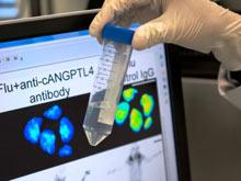 Получено антитело, способное перевернуть лечение гриппа и пневмонии