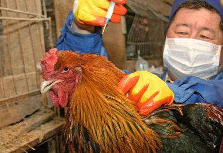 Птичий грипп преодолевает межвидовой барьер