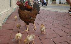 В США найдены три новых штамма птичьего гриппа