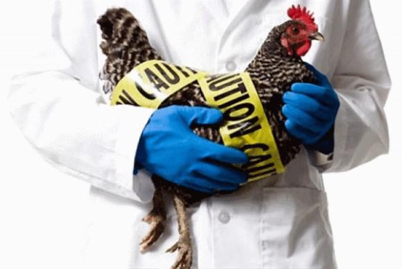 В Астраханской области зафиксирован птичий грипп