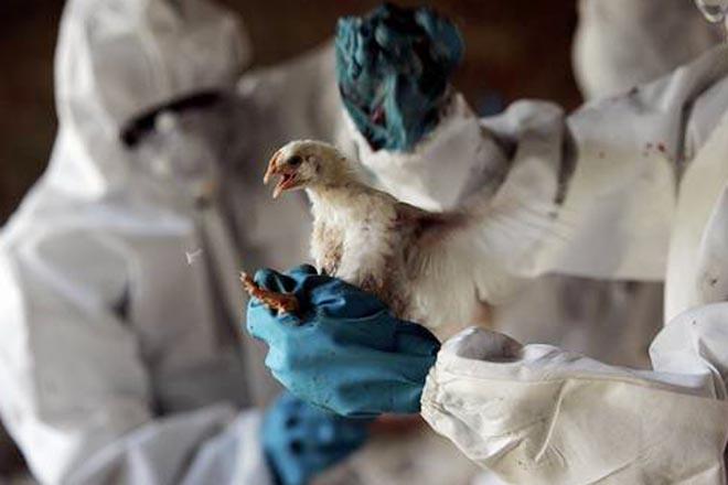 Риска распространения в Турции птичьего гриппа нет – минздрав