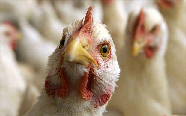 Азербайджан проводит профилактику в связи с «птичьим гриппом» в Турции