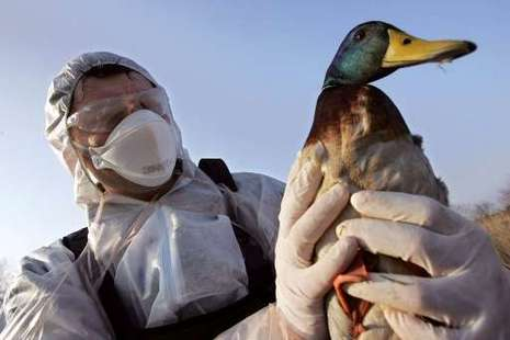 Меры по недопущению птичьего гриппа усилены в Кузбассе