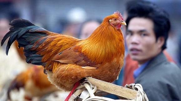 Эпидемия птичьего гриппа оказала большое влияние на международные рынки