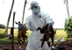 Птичий грипп и атипичная пневмония совместно атакуют Западную Европу