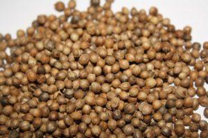 Кориандр — натуральный антибиотик