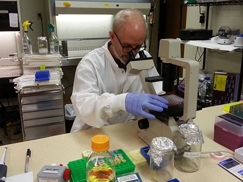 Универсальную вакцину от гриппа начнут испытывать на людях