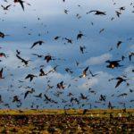В России выявлен штамм птичьего гриппа