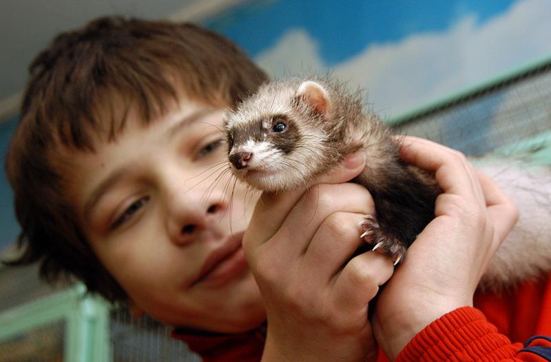 Экзотические животные опасны для детского иммунитета
