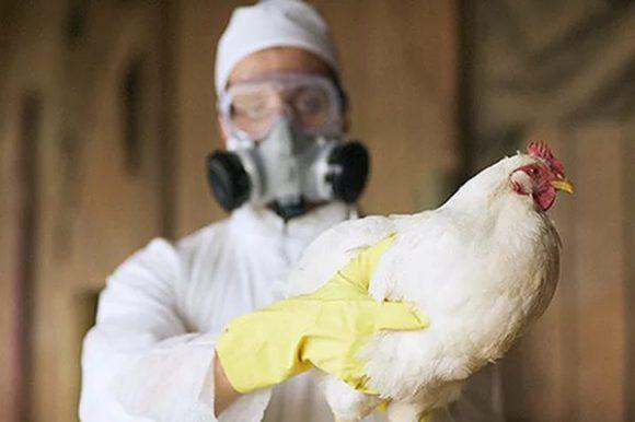 В Подмосковье из-за птичьего гриппа уничтожили почти 340 тысяч птиц