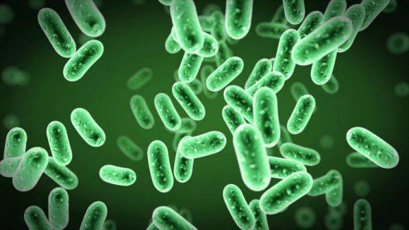 Ученые разработали замену антибиотикам