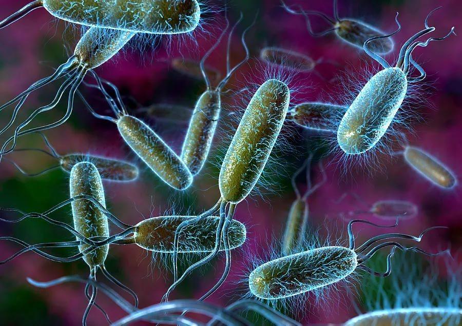 Компании США и Великобритании объединились в борьбе с опасными бактериями