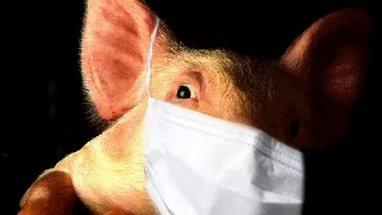 В России создадут лекарство от свиного гриппа