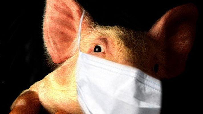 Зеленый чай способен справиться со свиным гриппом