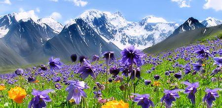 Лечебные травы Алтайского края