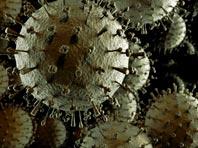 Вирус гриппа собираются превратить в страшное оружие против рака