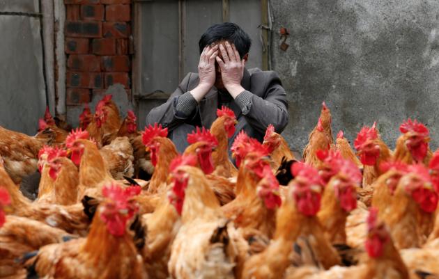 Три мутации могут сделать птичий грипп опасным для человека