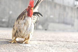 Птичий грипп у людей: симптомы и лечение