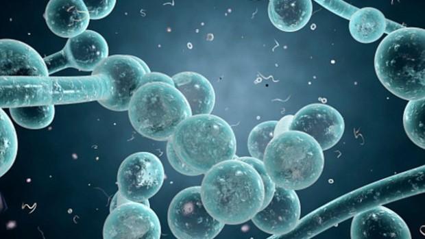 Половые инфекции могут вызывать психические заболевания