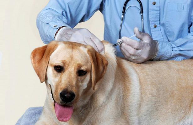 Вакцинация – не прихоть владельца животного, а обязанность