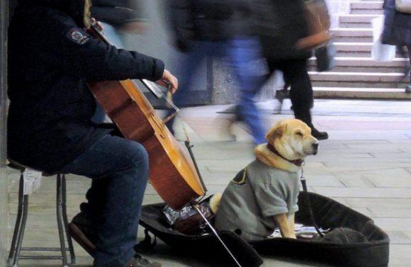 В столице проводится профилактика бешенства у диких животных