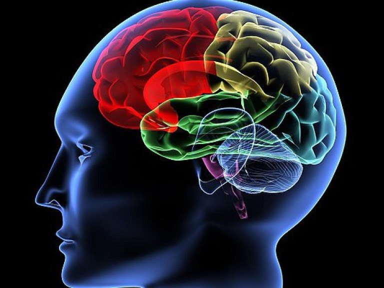 Инфекционные заболевания снижают уровень интеллекта — исследование
