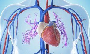 Найдено средство остановить воспалительные процессы в сердце в связи с вирусной инфекцией