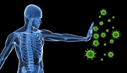 Хронические вирусные инфекции бьют по интеллекту