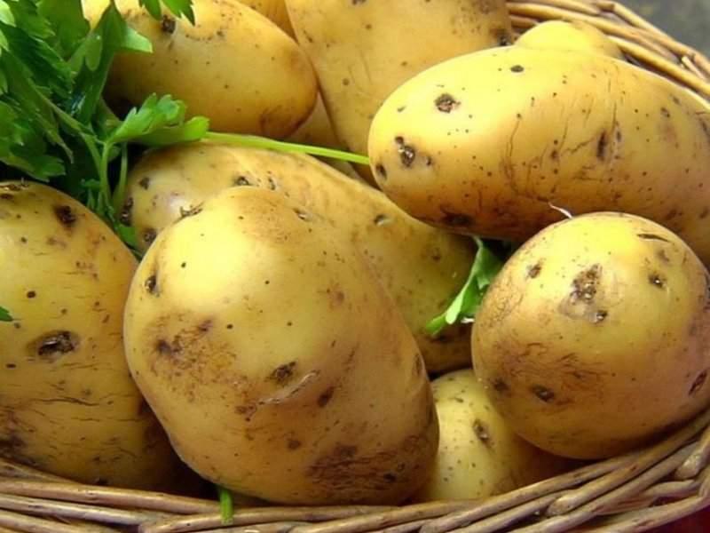 Медики рассказали, как картофель помогает вылечить гепатит