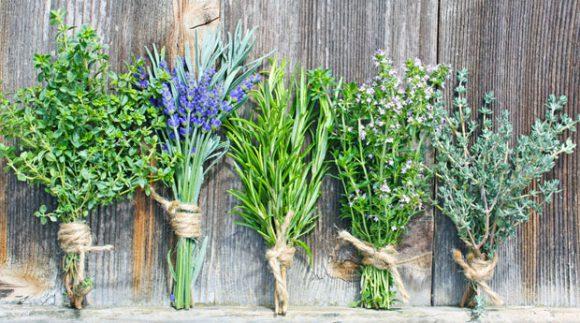 Полезные травы для здоровья легких
